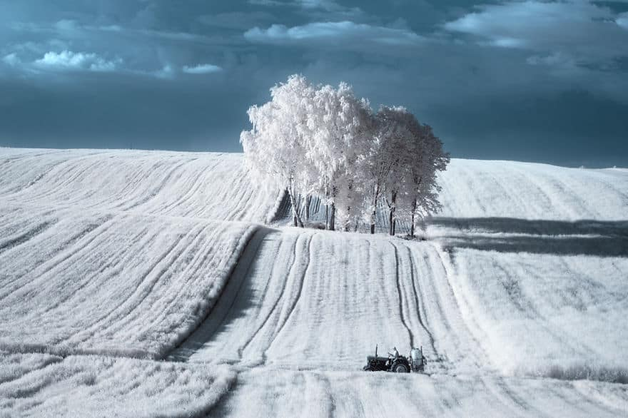 the-majestic-beauty-of-trees-captured-in-infrared-photography-2__880