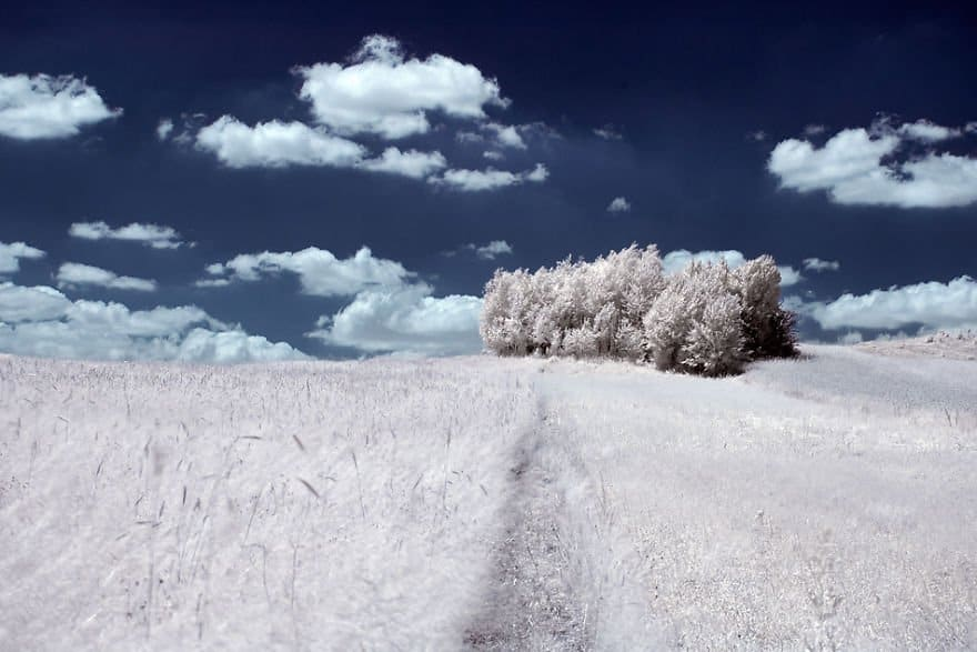 the-majestic-beauty-of-trees-captured-in-infrared-photography-6__880