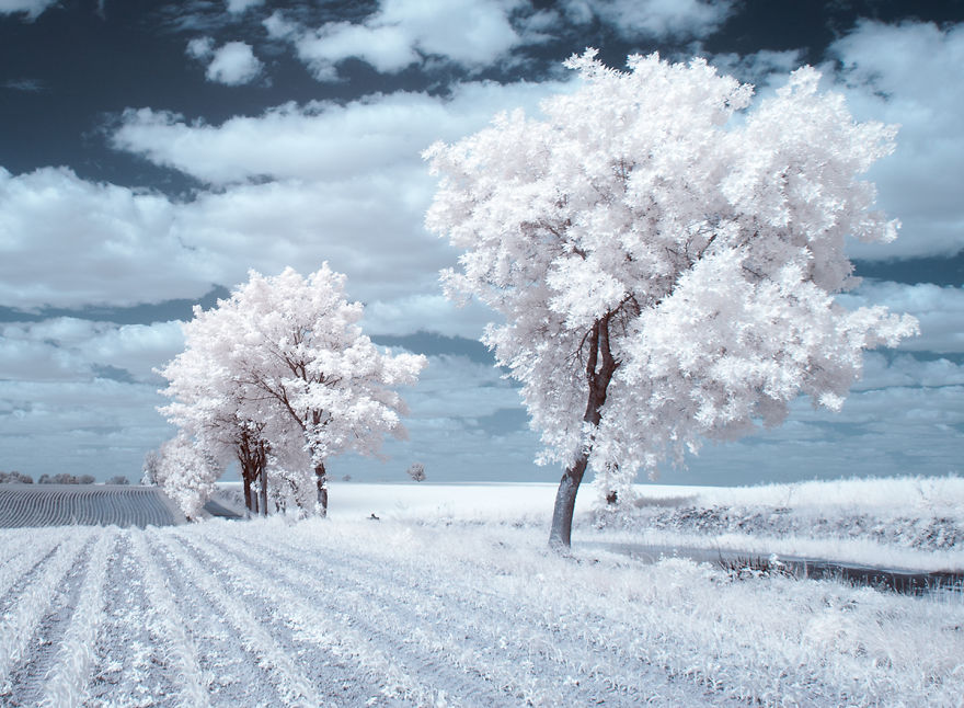 the-majestic-beauty-of-trees-captured-in-infrared-photography-7__880