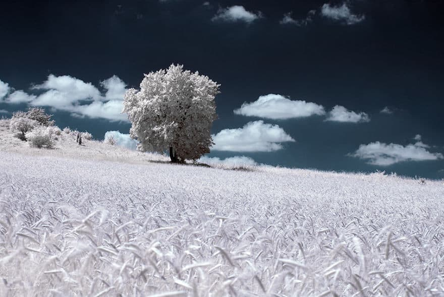the-majestic-beauty-of-trees-captured-in-infrared-photography-8__880